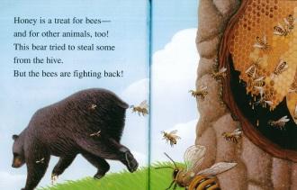 Honeybees inside